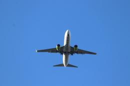 フレッシュマリオさんが、羽田空港で撮影したソラシド エア 737-81Dの航空フォト(飛行機 写真・画像)
