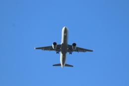 フレッシュマリオさんが、羽田空港で撮影した全日空 A321-272Nの航空フォト(飛行機 写真・画像)