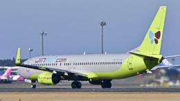 パンダさんが、成田国際空港で撮影したジンエアー 737-8B5の航空フォト(飛行機 写真・画像)