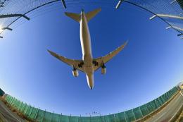 パンダさんが、成田国際空港で撮影した日本航空 787-9の航空フォト(飛行機 写真・画像)