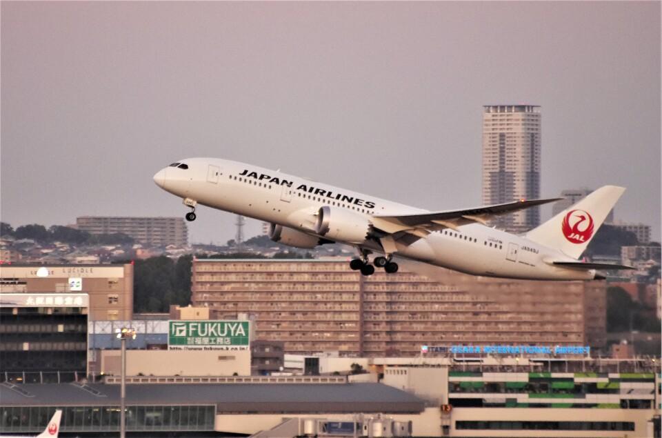 mild lifeさんの日本航空 Boeing 787-8 Dreamliner (JA849J) 航空フォト