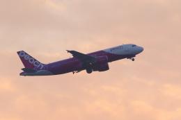 inyoさんが、成田国際空港で撮影したピーチ A320-214の航空フォト(飛行機 写真・画像)