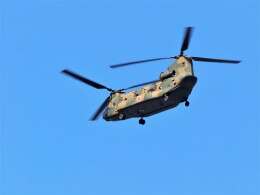 jp arrowさんが、岐阜基地で撮影した陸上自衛隊 CH-47JAの航空フォト(飛行機 写真・画像)