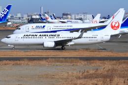 とらとらさんが、羽田空港で撮影した日本航空 737-846の航空フォト(飛行機 写真・画像)