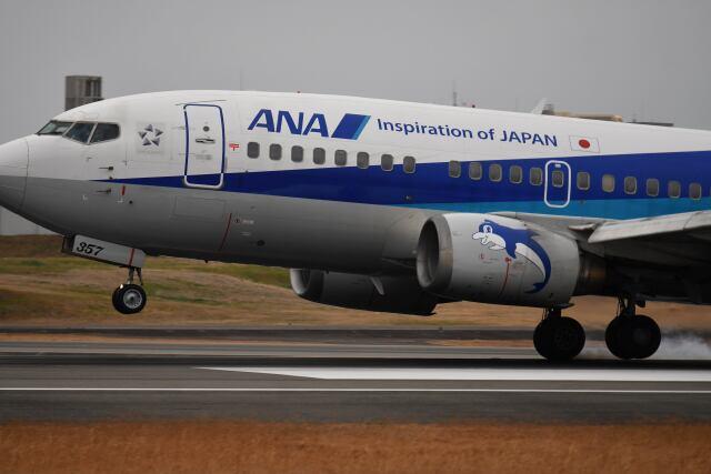 天心さんが、伊丹空港で撮影したANAウイングス 737-5L9の航空フォト(飛行機 写真・画像)