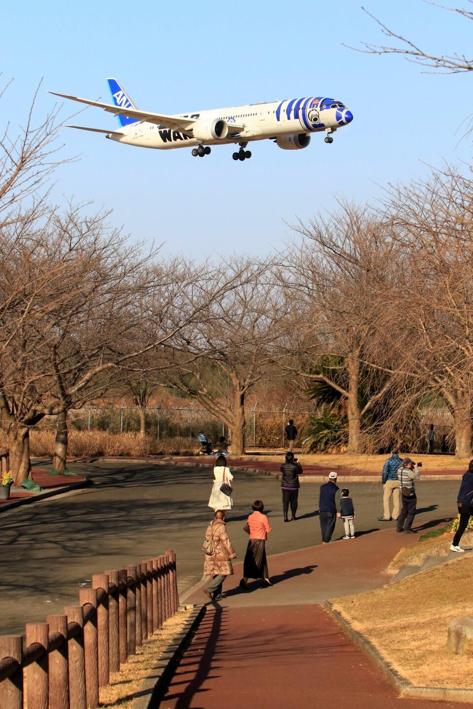 ☆ライダーさんの全日空 Boeing 787-9 (JA873A) 航空フォト