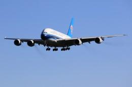 メンチカツさんが、成田国際空港で撮影した中国南方航空 A380-841の航空フォト(飛行機 写真・画像)