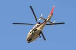 Hiro-hiroさんが、羽田空港で撮影した読売新聞 AS365N2 Dauphin 2の航空フォト(飛行機 写真・画像)