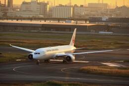 T.Sazenさんが、羽田空港で撮影した日本航空 787-9の航空フォト(飛行機 写真・画像)