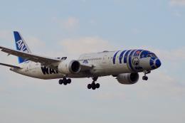 飛行機ゆうちゃんさんが、成田国際空港で撮影した全日空 787-9の航空フォト(飛行機 写真・画像)