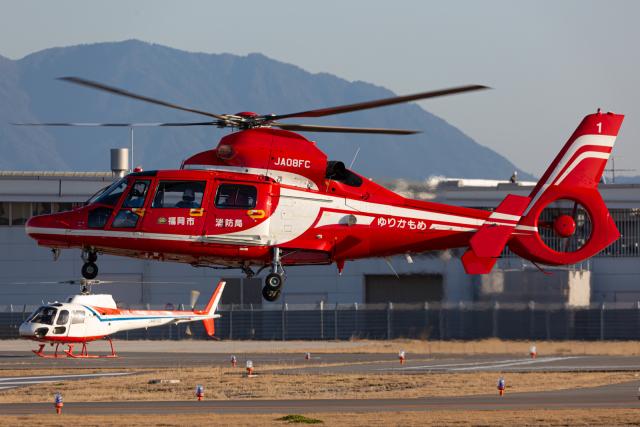 (新)ふぁんとむ改さんが、奈多ヘリポートで撮影した福岡市消防局消防航空隊 AS365N3 Dauphin 2の航空フォト(飛行機 写真・画像)