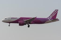 みぐさんが、成田国際空港で撮影したピーチ A320-214の航空フォト(飛行機 写真・画像)
