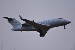 RyuRyu1212さんが、横田基地で撮影した連邦航空局 CL-600-2B16 Challenger 605の航空フォト(飛行機 写真・画像)