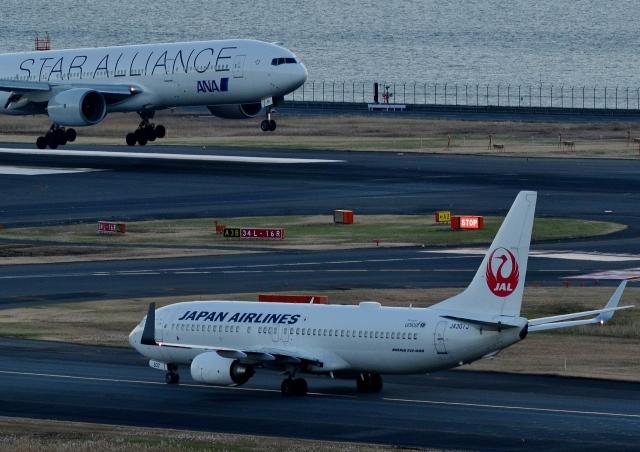h_wajyaさんが、羽田空港で撮影した日本航空 737-846の航空フォト(飛行機 写真・画像)