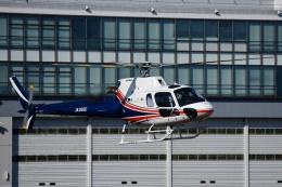 Mizuki24さんが、東京ヘリポートで撮影したノエビア AS350B3 Ecureuilの航空フォト(飛行機 写真・画像)