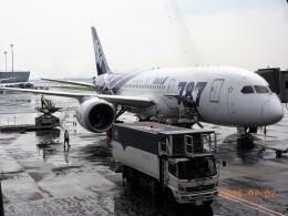 mich_stoneさんが、スワンナプーム国際空港で撮影した全日空 787-8 Dreamlinerの航空フォト(飛行機 写真・画像)