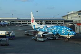 kenzy201さんが、那覇空港で撮影した日本トランスオーシャン航空 737-8Q3の航空フォト(飛行機 写真・画像)