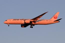 Shin-chaさんが、成田国際空港で撮影した日本航空 787-9の航空フォト(飛行機 写真・画像)
