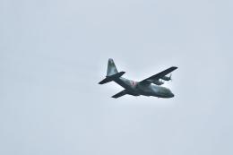 サイパンだ!さんが、習志野演習場で撮影した航空自衛隊 C-130H Herculesの航空フォト(飛行機 写真・画像)