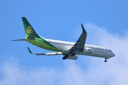 jutenLCFさんが、中部国際空港で撮影した春秋航空日本 737-8ALの航空フォト(飛行機 写真・画像)