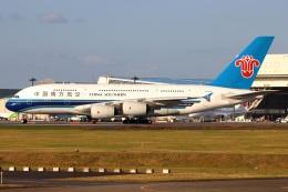 たみぃさんが、成田国際空港で撮影した中国南方航空 A380-841の航空フォト(飛行機 写真・画像)