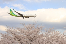 Hiro-hiroさんが、成田国際空港で撮影した春秋航空日本 737-86Nの航空フォト(飛行機 写真・画像)