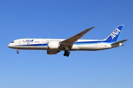 Shin-chaさんが、成田国際空港で撮影した全日空 787-9の航空フォト(飛行機 写真・画像)