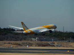kiyo hさんが、成田国際空港で撮影したスクート 787-8 Dreamlinerの航空フォト(飛行機 写真・画像)