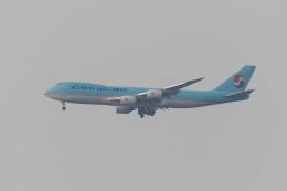 Koenig117さんが、関西国際空港で撮影した大韓航空 747-8HTFの航空フォト(飛行機 写真・画像)