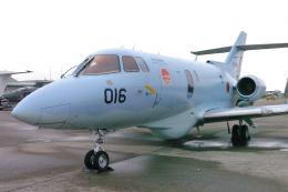 senyoさんが、茨城空港で撮影した航空自衛隊 U-125A(Hawker 800)の航空フォト(飛行機 写真・画像)