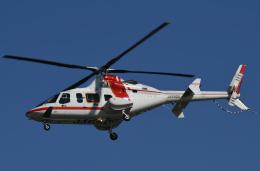 チャーリーマイクさんが、東京ヘリポートで撮影した朝日航洋 430の航空フォト(飛行機 写真・画像)