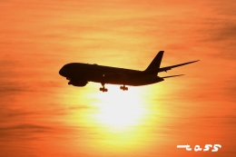 tassさんが、成田国際空港で撮影したZIPAIR 787-8 Dreamlinerの航空フォト(飛行機 写真・画像)