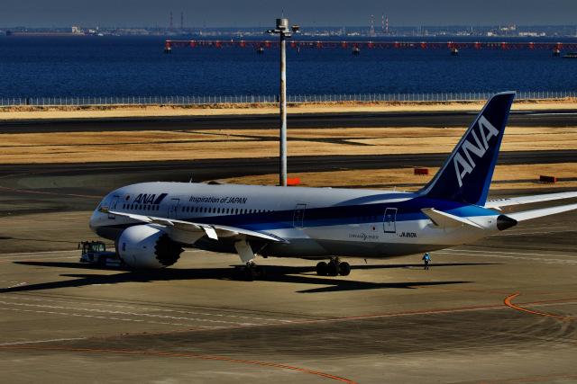 M.airphotoさんが、羽田空港で撮影した全日空 787-8 Dreamlinerの航空フォト(飛行機 写真・画像)