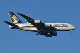 Deepさんが、成田国際空港で撮影したシンガポール航空 A380-841の航空フォト(飛行機 写真・画像)