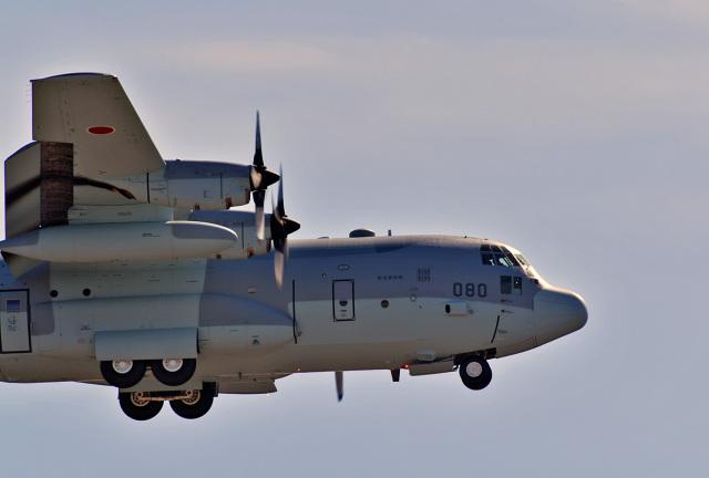 鈴鹿@風さんが、岐阜基地で撮影した航空自衛隊 C-130H Herculesの航空フォト(飛行機 写真・画像)