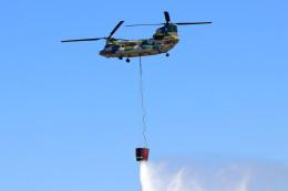 szkkjさんが、入間飛行場で撮影した航空自衛隊 CH-47J/LRの航空フォト(飛行機 写真・画像)