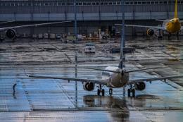 rokko2000さんが、関西国際空港で撮影した山東航空 737-85Nの航空フォト(飛行機 写真・画像)