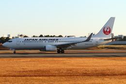 B14A3062Kさんが、伊丹空港で撮影した日本航空 737-846の航空フォト(飛行機 写真・画像)