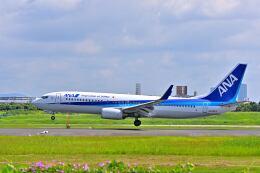 航空フォト:JA55AN 全日空 737-800