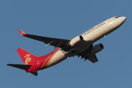 木人さんが、成田国際空港で撮影した深圳航空 737-87Lの航空フォト(飛行機 写真・画像)