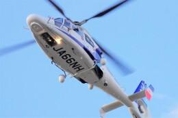 mild lifeさんが、伊丹空港で撮影したオールニッポンヘリコプター AS365N3 Dauphin 2の航空フォト(飛行機 写真・画像)