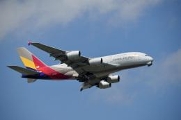 飛行機ゆうちゃんさんが、成田国際空港で撮影したアシアナ航空 A380-841の航空フォト(飛行機 写真・画像)