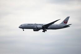 レドームさんが、羽田空港で撮影した日本航空 787-8 Dreamlinerの航空フォト(飛行機 写真・画像)