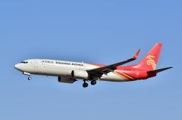ウィングはくつるさんが、成田国際空港で撮影した深圳航空 737-87Lの航空フォト(飛行機 写真・画像)