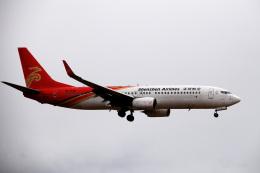 アルビレオさんが、成田国際空港で撮影した深圳航空 737-87Lの航空フォト(飛行機 写真・画像)