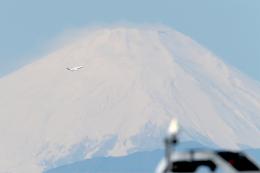 AkiChup0nさんが、羽田空港で撮影したスカイマーク 737-8FZの航空フォト(飛行機 写真・画像)