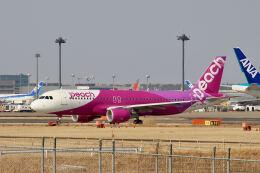 やまモンさんが、成田国際空港で撮影したピーチ A320-214の航空フォト(飛行機 写真・画像)