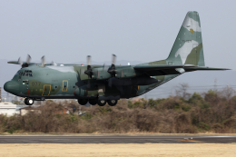 Hariboさんが、名古屋飛行場で撮影した航空自衛隊 C-130H Herculesの航空フォト(飛行機 写真・画像)