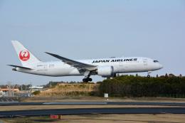 アルビレオさんが、成田国際空港で撮影した日本航空 787-8 Dreamlinerの航空フォト(飛行機 写真・画像)