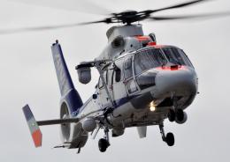TOY2011さんが、伊丹空港で撮影したオールニッポンヘリコプター AS365N2 Dauphin 2の航空フォト(飛行機 写真・画像)